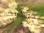 Psychadelic Mushrooms